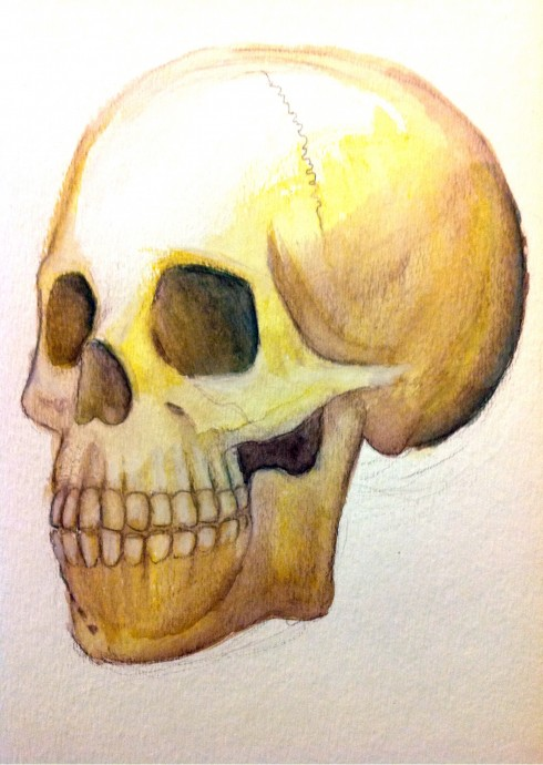 Skull - Watercolor Pencils - Jan 8, 2014